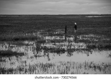 Seagull sitting on a pole at the North Sea coast