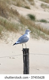 seagull sitting on poles