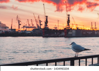Seagull sitting on a railings in port of Hamburg at sunset
