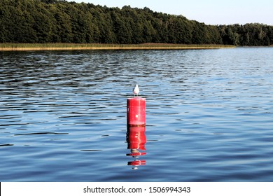 Seagull is sitting on a red buoy, Masurian lake plate, Poland