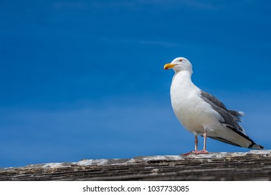seagull sitting on a roof with a blue sky background and wispy clouds