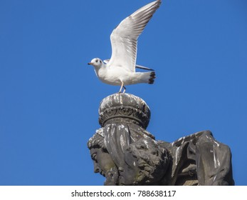 Seagull sitting on stone statue head
