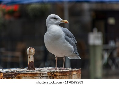 Seagull sitting on the water