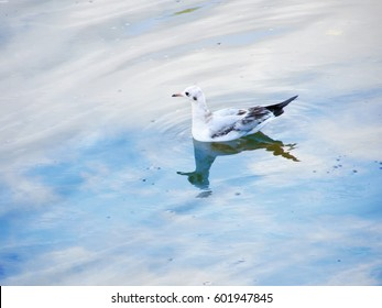 Seagull sitting on the water in which the sky is reflected