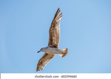 Seagull up in the sky