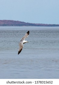A seagull soaring above Grand Traverse bay in Northern Michigan on a Spring afternoon.