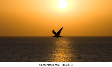 Seagull soaring over the sea at sunset