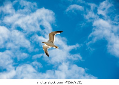 Seagull soaring under a blue sky