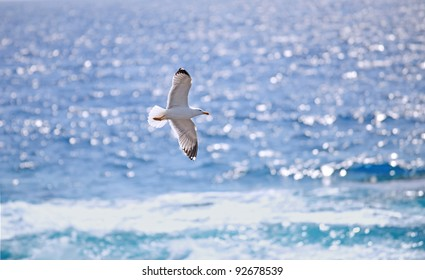 Seagull and Sparkling Ocean