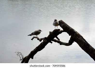 seagull standing on log