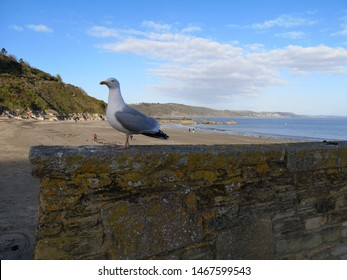 seagull standing on looe pier wall in cornwall