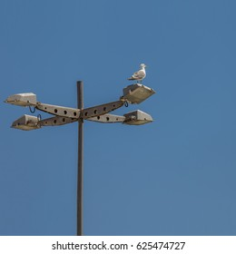 Seagull Standing up on a Marina Pole light