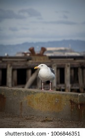 Seagull Standing on Pier