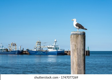 Seagull standing on a pole at the Sylt harbor, Schleswig-Holstein, Germany
