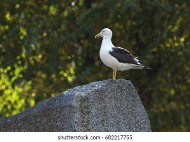 Seagull standing on the stone
