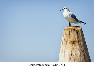 seagull standing on a tree trunk at a lake