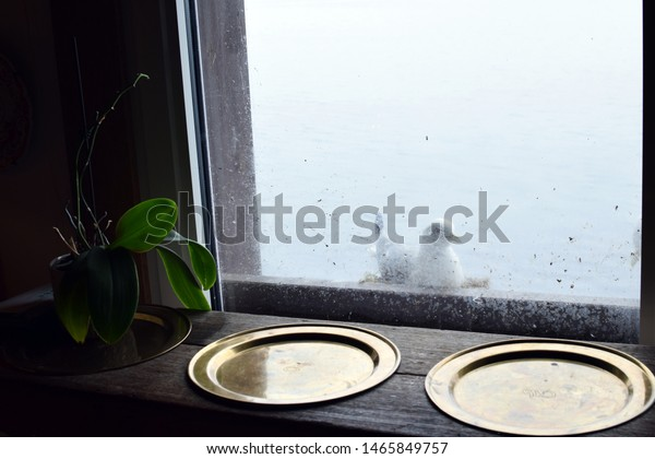 Seagull standing on a vintage window ledge and looking into the room with green leaves plant and metal bowls near window