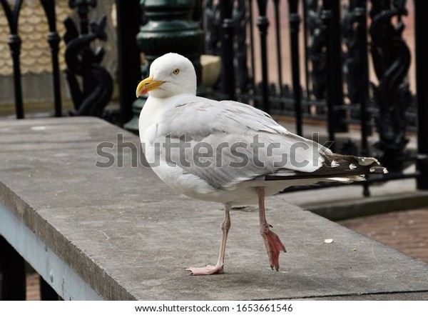 a seagull standing on a wall