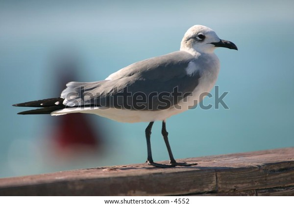 seagull standing on wooden pier