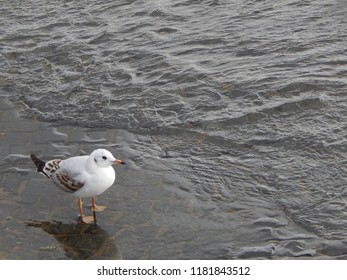 A seagull stands near the water