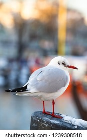 Seagull stands on pillar at sunny cold winter, small town harbor background (copy space)
