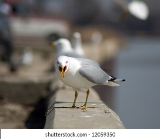 A seagull staring at the camera looking mad
