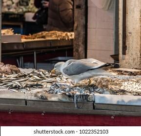 Seagull Stealing Fish In Venice Rialto Market
