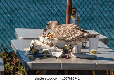 A seagull steals food (seafood) from an unattended table at Moss Landing Harbor in Monterey California.