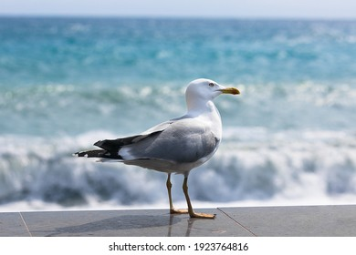 Seagull in summer on the beach