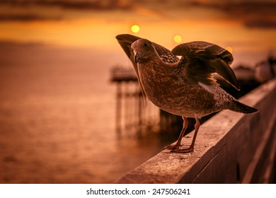 A seagull at sunrise on a pier