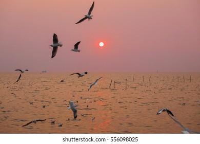 Seagull in sunset lake