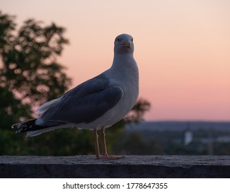Seagull with sunset on background in  the city