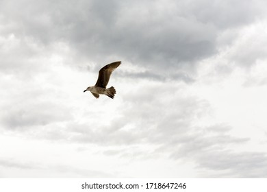 A Seagull take flight against a cloudy backdrop