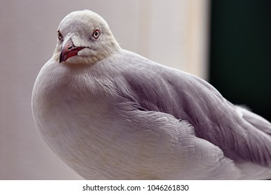 Seagull. These birds can readily be found around coastal areas. They eat primarily seafood, but have been known to scavenge and eat leftover food from humans, such as chips and bread.