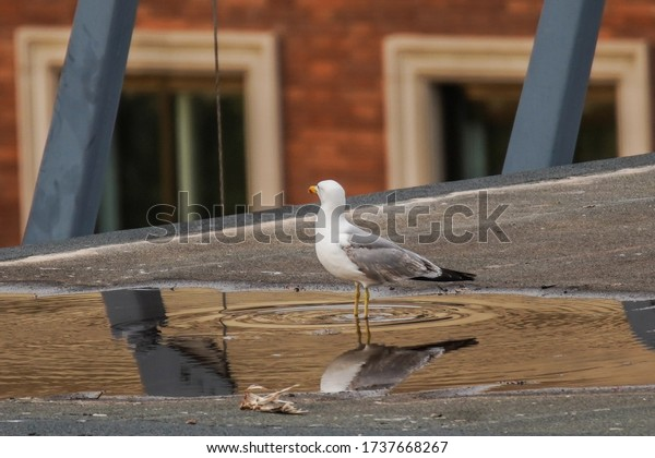 Seagull in top roof building in the city.   Aerial Shoot