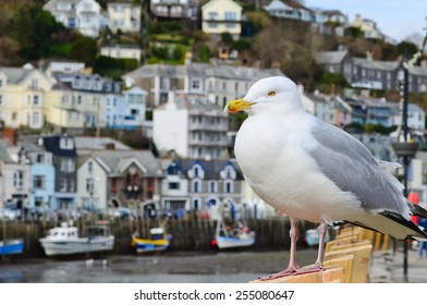 Seagull in a typically British seaside town setting, photo was taken in Looe which is in Cornwall, England.