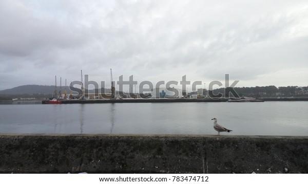 Seagull and Viana do Castelo harbor.