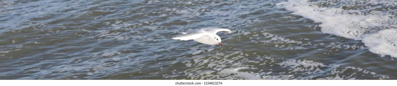 Seagull and Wadden sea, Dutch.
