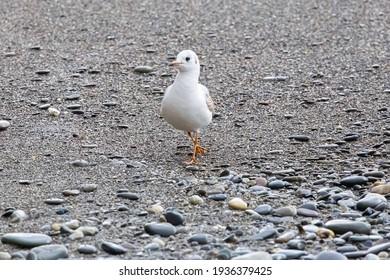 seagull wallking on the seashore