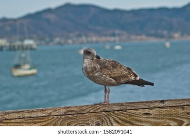 Seagull watches the boats on the ocean from the pier beautiful blue sky