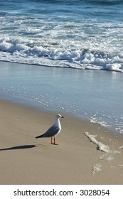 Seagull watching the surf