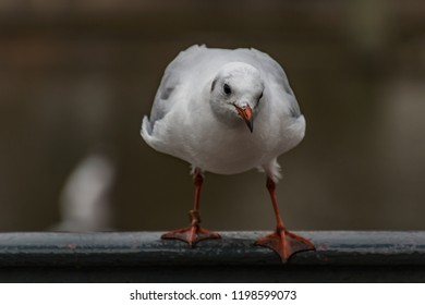 seagull watching you