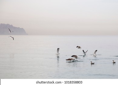 Seagulls in Albir beach on the Mediterranean coast of Spain Alfaz del  Pi