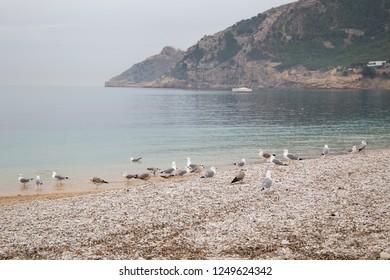 Seagulls in Albir beach on the Mediterranean coast of Spain Alfaz del  Pi