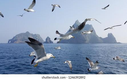 Seagulls around Dokdo