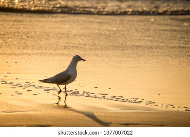 Seagulls at the beach over the sunrise