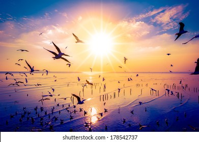 Seagulls Beautiful sunset sky birds flying in Thailand background happiness calm nature clound