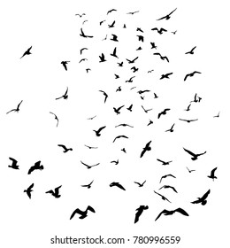 Seagulls black silhouette on isolated white background. illustration