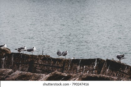 Seagulls by the Ocean