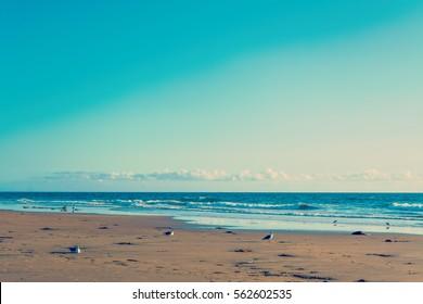 Seagulls by the sea in Newport Beach, California